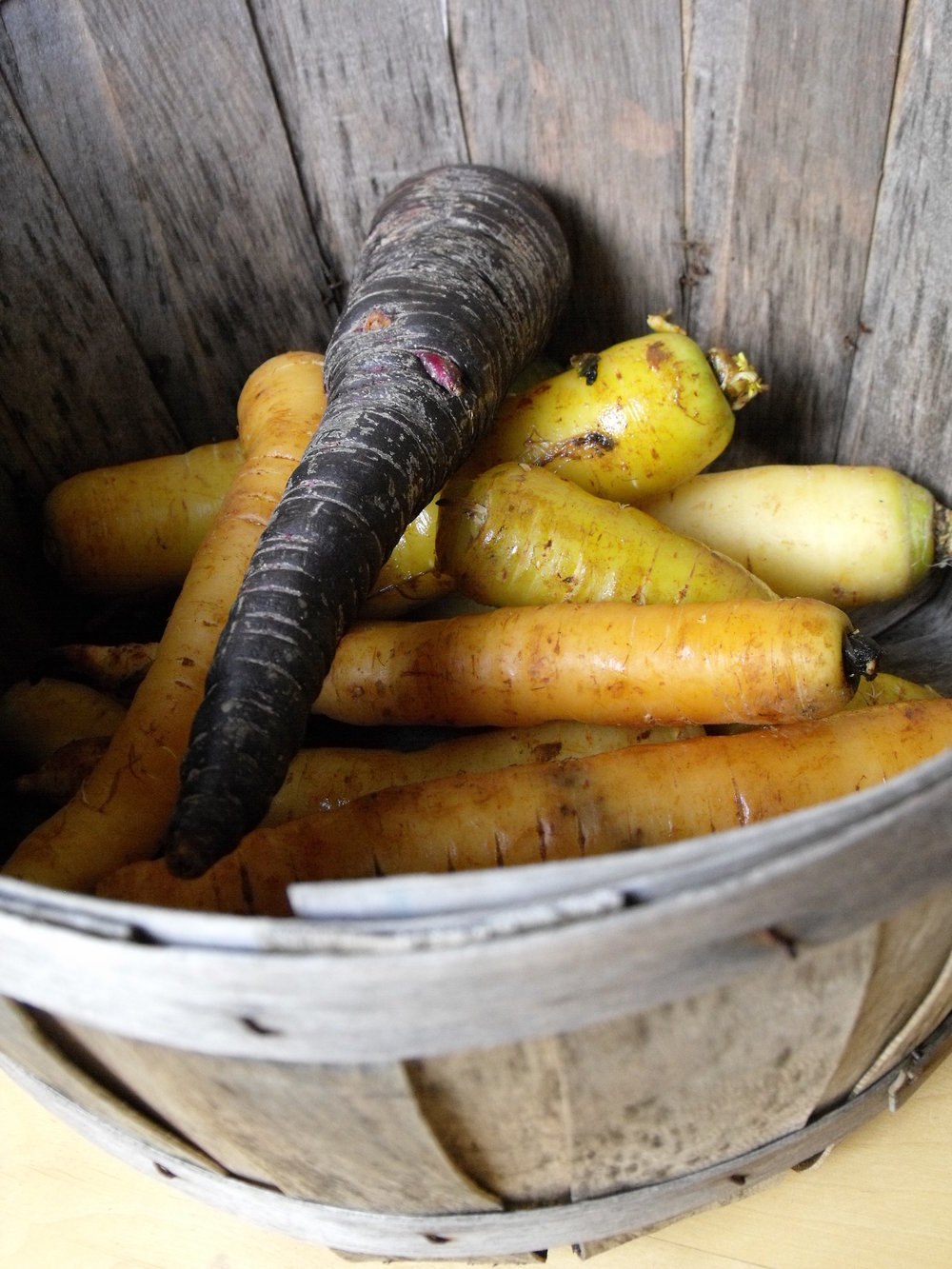 27 Carrots in bushel basket.JPG