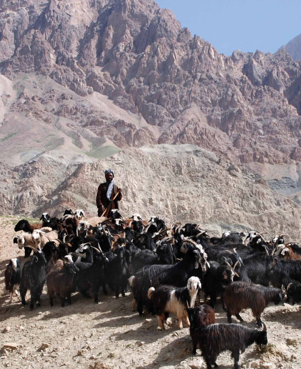 Cashmere in Afghanistan — From The Mountain