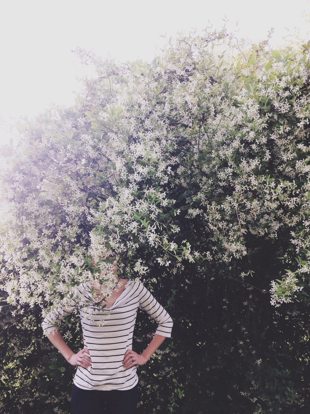 "Driving through my neighborhood with my friend Kelly, I passed this wall of jasmine, slammed on the brakes, and announced ""I SEE A PICTURE. WE'RE GETTING OUT OF THE CAR."" My friends are very accustomed to becoming spur-of-the-moment models."