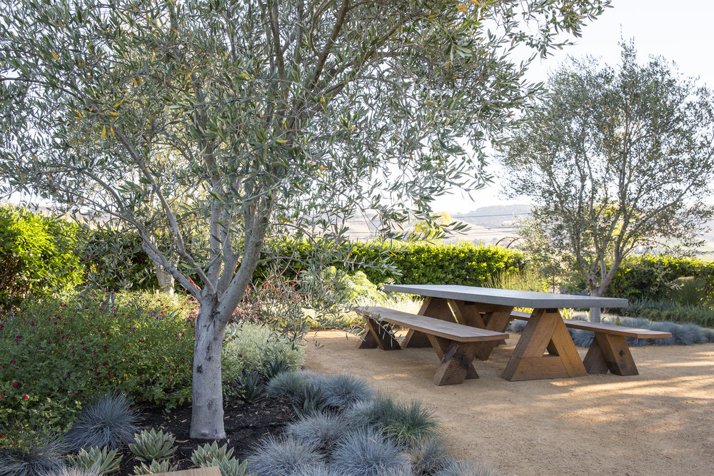 Gathering Space  Welcome to the ultimate outdoor living room. This party spot has it all—shade from the sun, ample room for entertaining, and a lush planting that offers year-round appeal with minimal maintenance. The  Sunset  Western Garden Collection, curated for low-water, high-impact plants, mingles with architectural succulents and a handful of other unique specimens. Look closely at our combinations to glean design ideas for maximizing color, texture, and beauty.  Design:  Homestead Design Collective  Special Thanks To:  Artefact Design & Salvage,   Sonoma Materials, Succulent Gardens ,   Sunset  Western Garden Collection