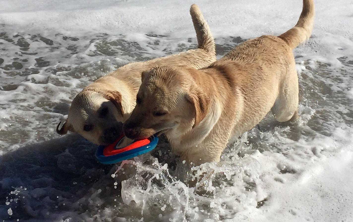 Dog friendly beach santa barbara collar me crazee dog friendly beach santa barbara solutioingenieria Gallery