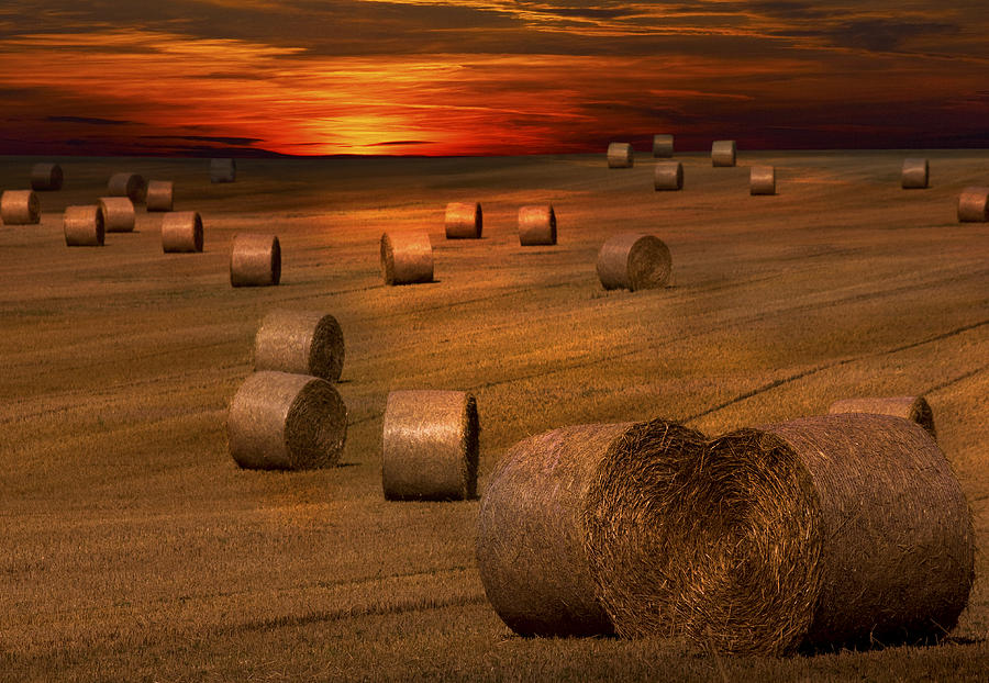 harvest-sunset-darren-burroughs.jpg