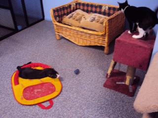 dogspk2011.jpg
