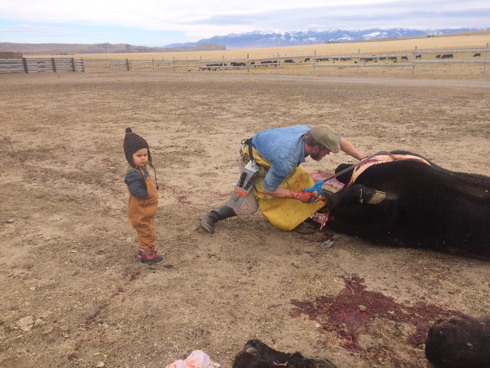 Jasper on her first cow slaughter!  She was perfectly calm and interested.