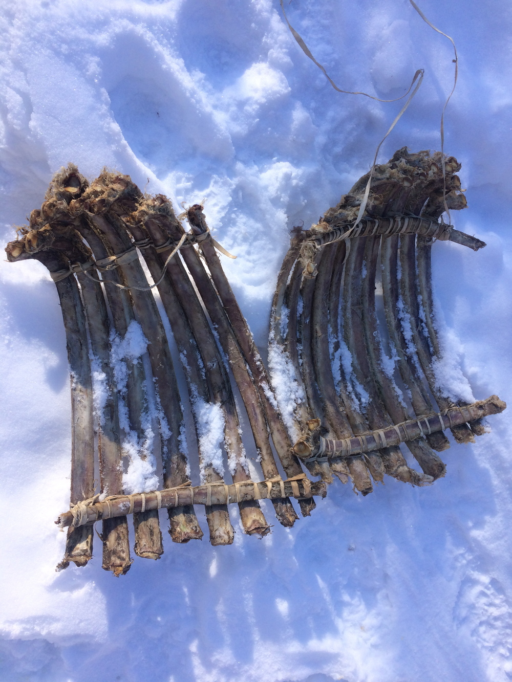 Buffalo Rib Bone Sled