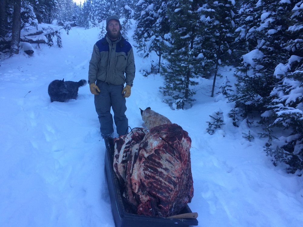 Three elk carcasses, one pelvis, elk hocks, a bag of wild berries, and lots of elk fat scraps.  Straight up a mountainside.