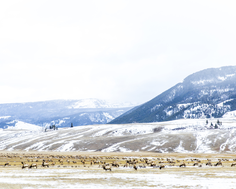 MO_Wyoming_2.jpg