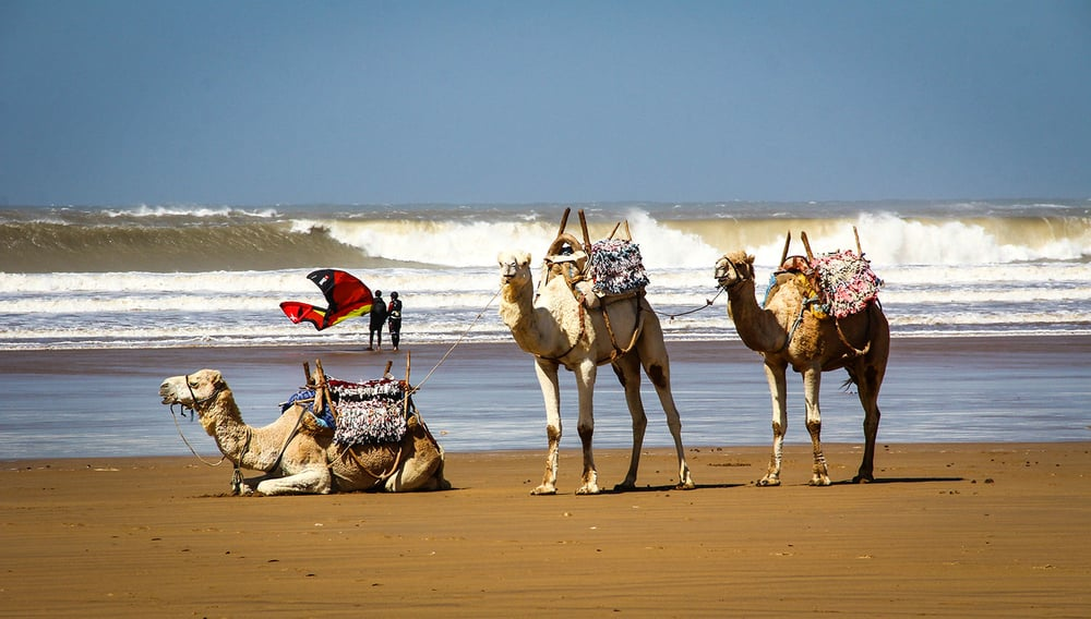 camels_surf_morocco.jpg