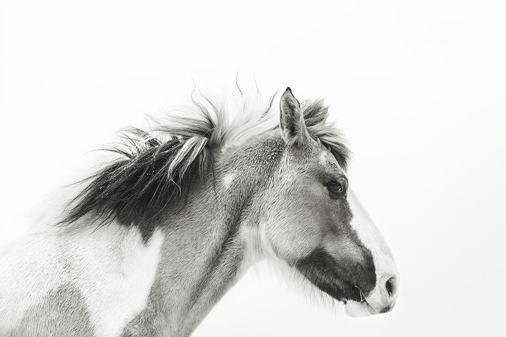 Tracey Buyce Horse Photography