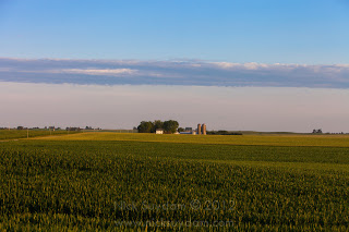 Lush-Green-Corn-Fields-Midwest-Rural.jpg