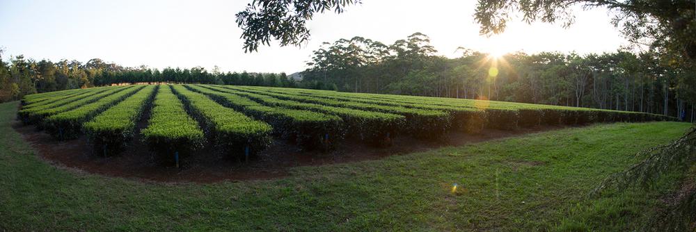 _arakai-image-Panorama copy.jpeg