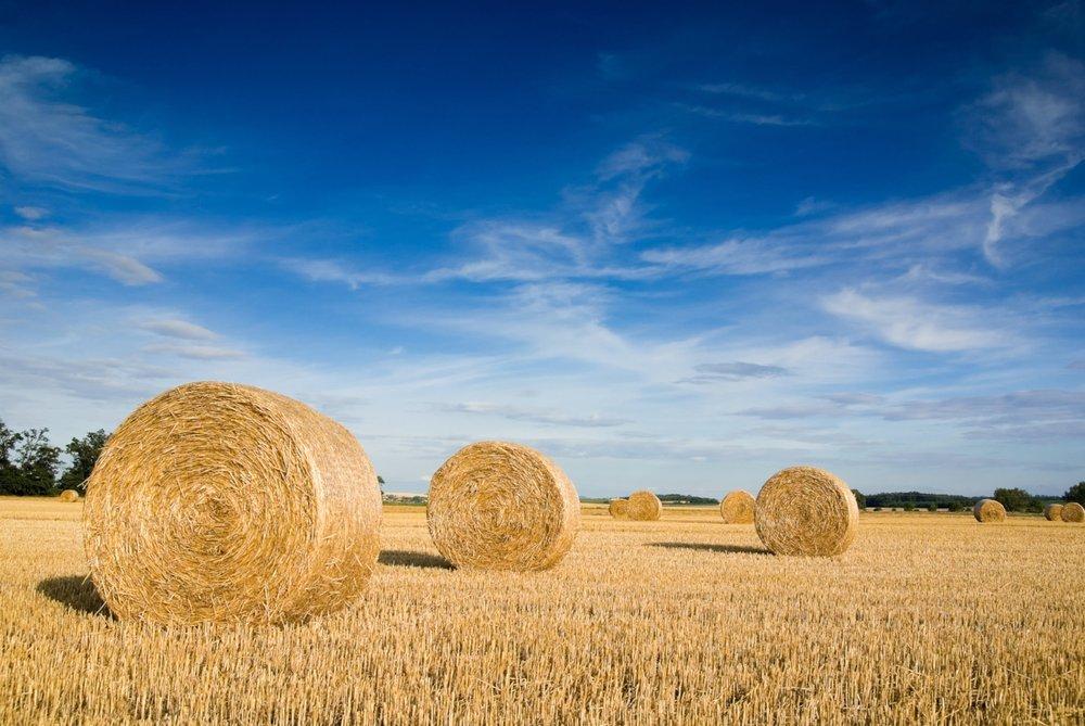 bigstock-Straw-Bales-1857445.jpg