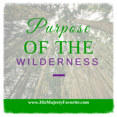 purpose of the wilderness