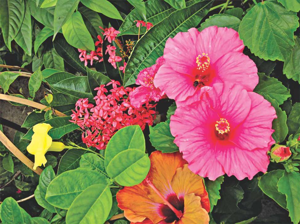 plantscalling.jpg