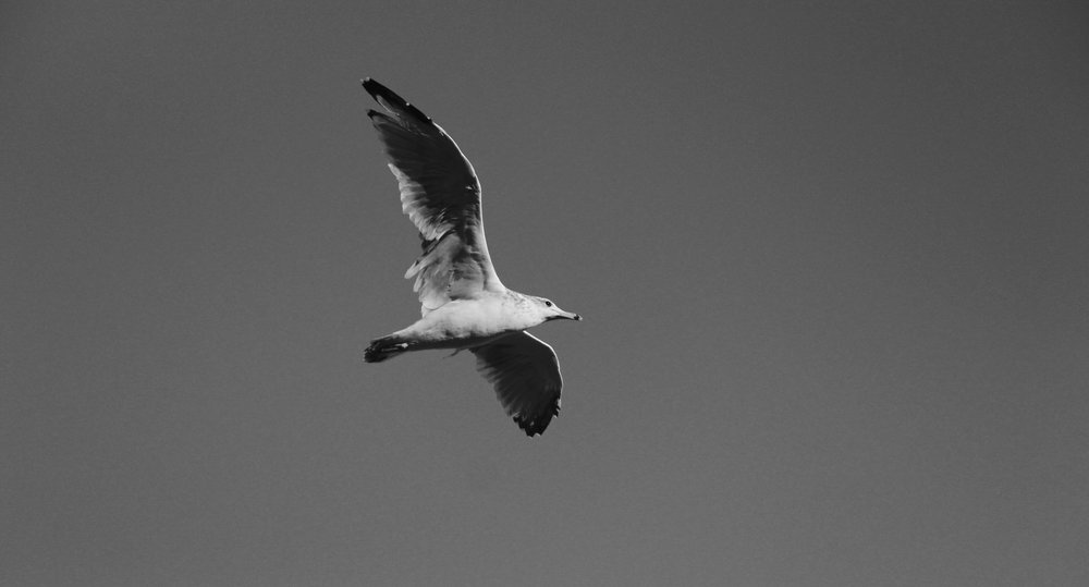 black and white bird.jpg