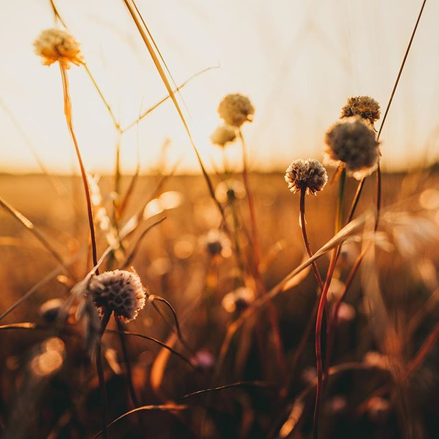 015 -Summer  #wildflowers #sunset #summer #nature #grass