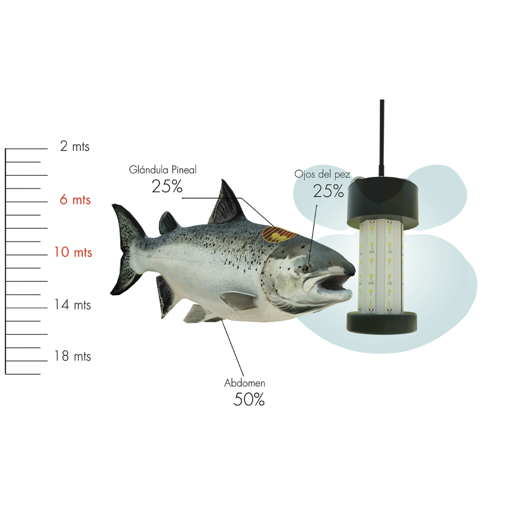 LED Omni-Direccional
