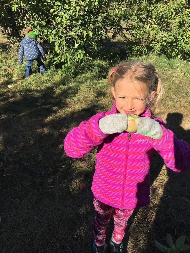 Apple Picking Kindergarten.jpg