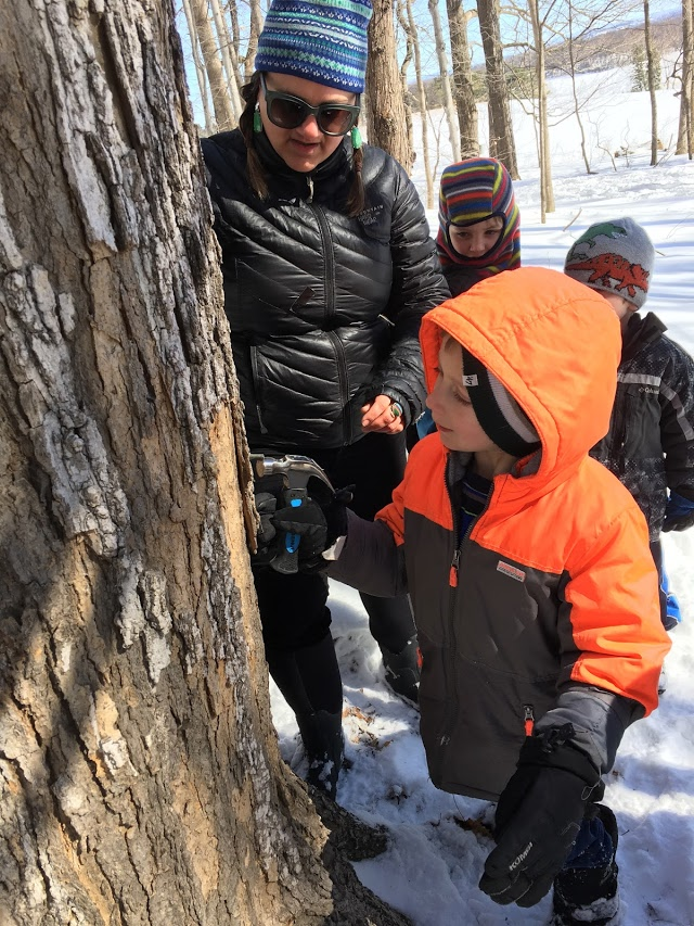 maple sugaring K.jpg