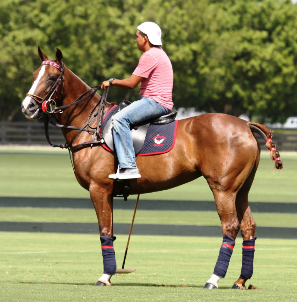 Horse Sports in Wellington, Florida - Join the excitement!