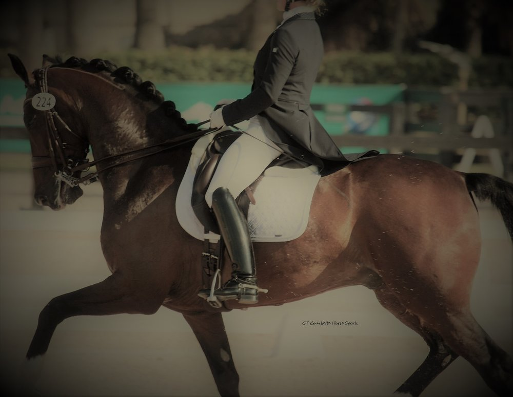 The Dressage Horse in Competition 7 2019.jpg