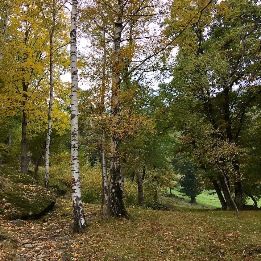 Autunno Canavese