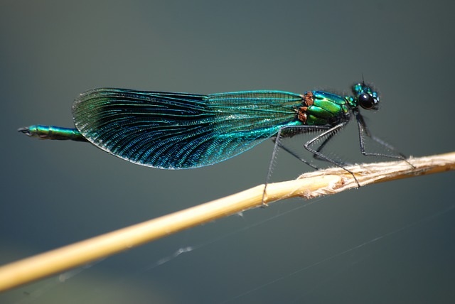 damsel-fly.jpg