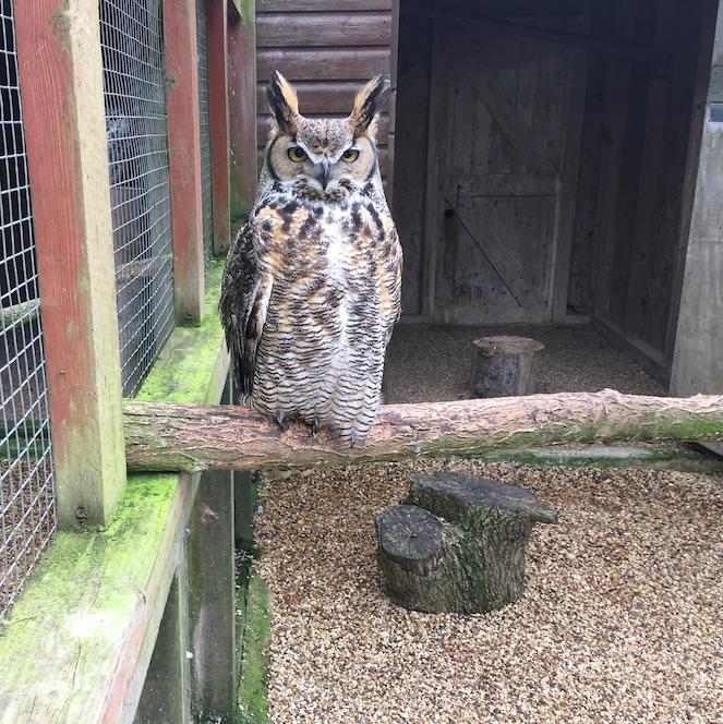 big owl.jpg