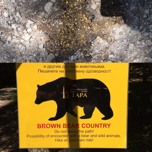 bear poo.jpg