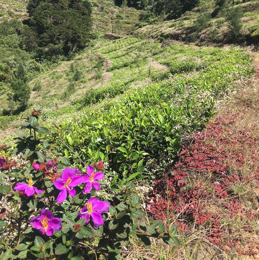 flowers and tea plants.jpg