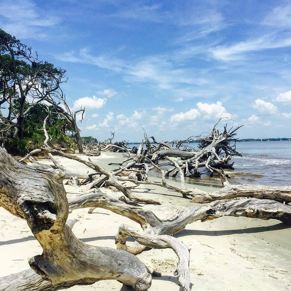 driftwood beach.jpg