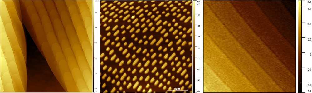 Images of a butterfly wing, DVD bits, and silicon carbide lattice steps taken with an nGauge AFM.