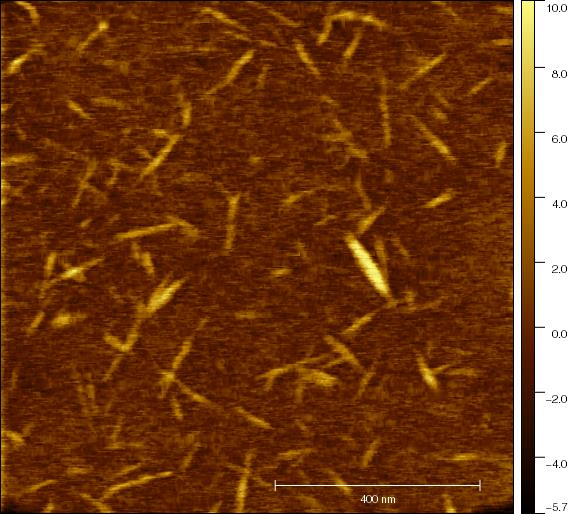 Cellulose nanocrystals (CNCs)
