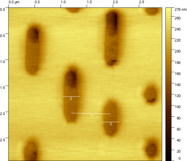 AFM topography image of a DVD with three distance lines.