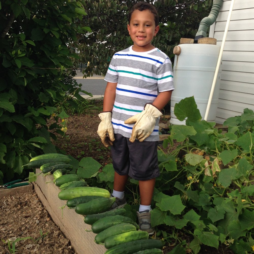Grow With Us - Our K-4 students are responsible for our 5 organic raised garden beds, from beginning to end. Students select the seeds that they plant, cultivate their crops, and reap the rewards of a good harvest!