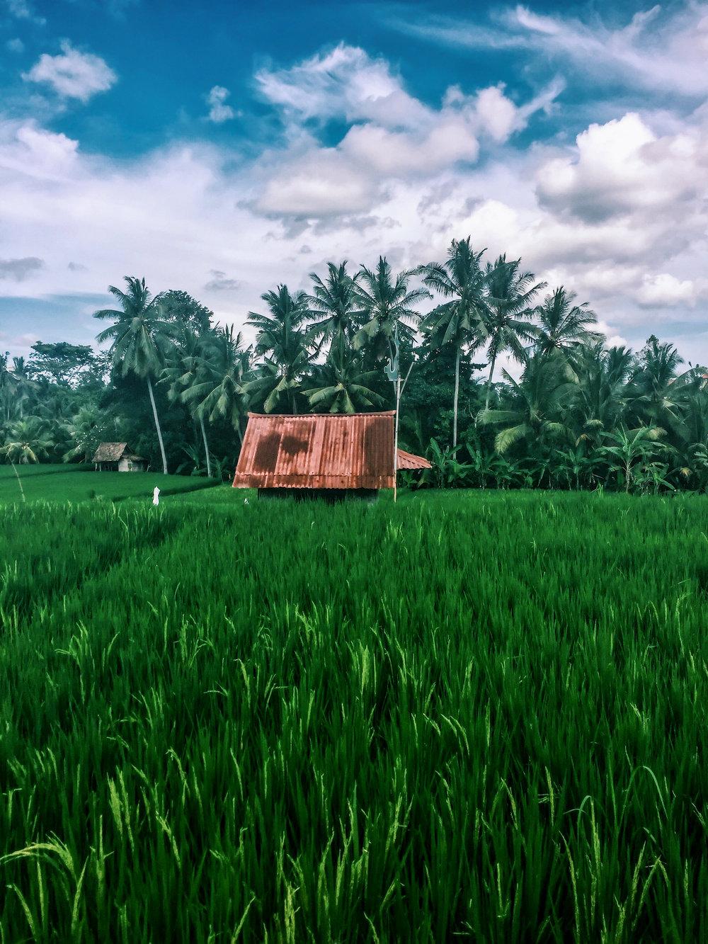 Ubud, Bali, Indonesia, Asia | www.DoLessGetMoreDone.com |