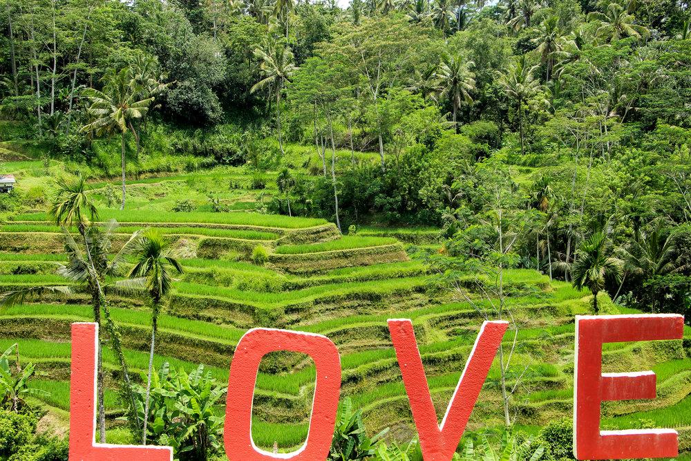 Tegallalang Rice Terrace, Bali, Southeast Asia | DoLessGetMoreDone.com |