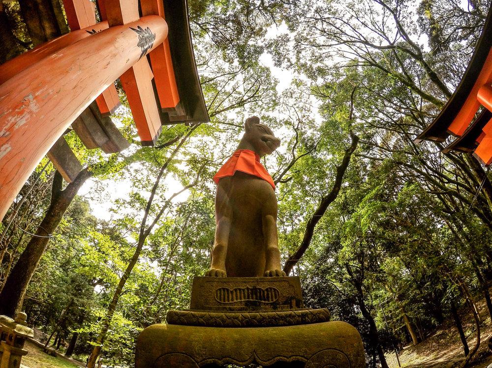 Fushimi Inari Taisha,Kyoto, Japan, East Asia | DoLessGetMoreDone.com |