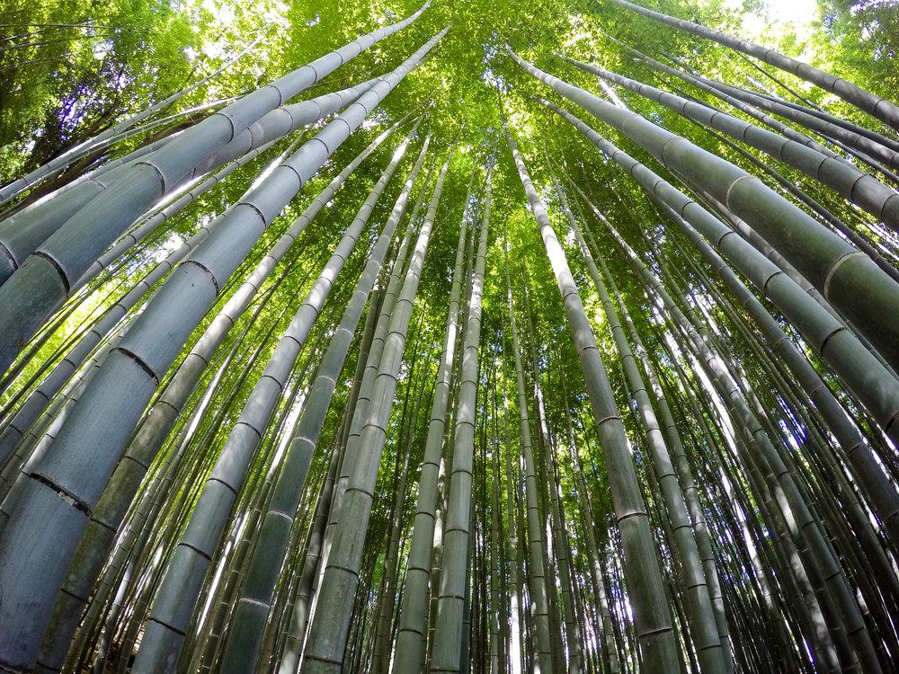 Arashiyama Bamboo Forest,Kyoto, Japan, East Asia | DoLessGetMoreDone.com |