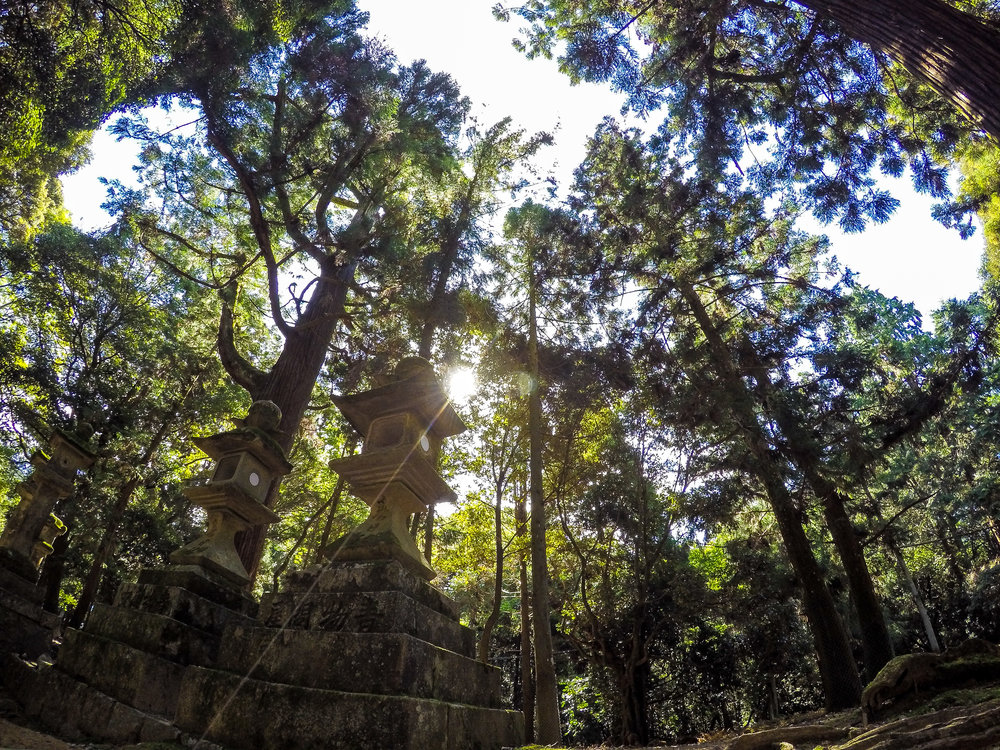 torii gate and stone lanterns, Nara, Japan, Asia | DoLessGetMoreDone.com | Where Do You Feel Right At Home?