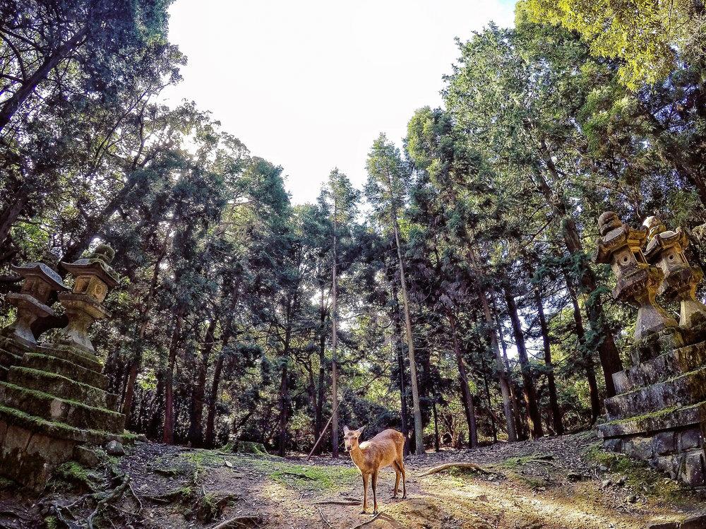 Nara Park, Nara, Japan, Asia | DoLessGetMoreDone.com | Where Do You Feel Right At Home?