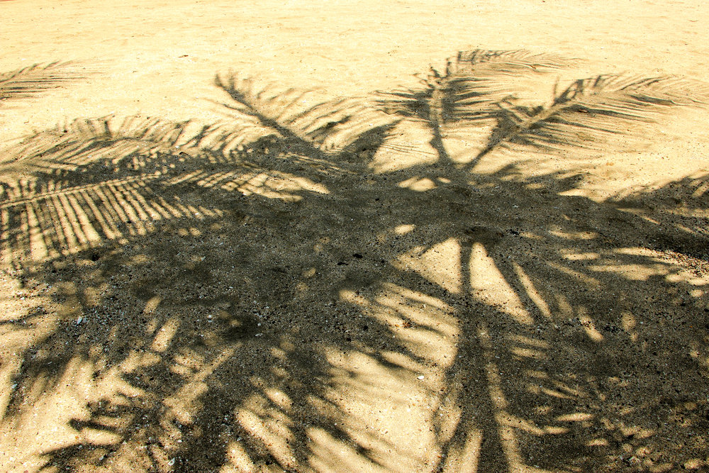 Palm tree, shadow, Bali, Indonesia, Asia | DoLessGetMoreDone.com |