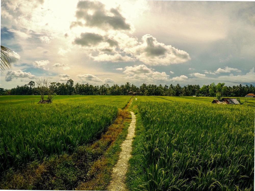 Ubud, Gianyar,Bali, Asia | DoLessGetMoreDone.com |