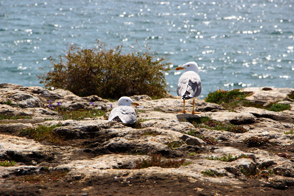 Praia de Albandeira, Portugal, Europe | DoLessGetMoreDone.com | What can we do to make it better?