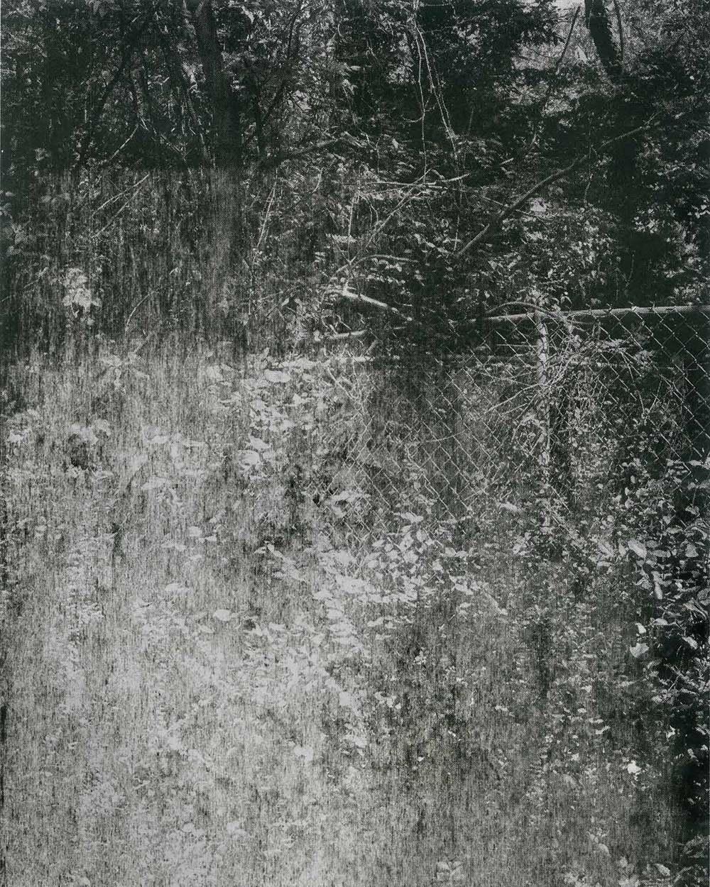 tree-02-web.jpg