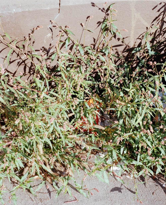weedscheeto-web-1500.jpg