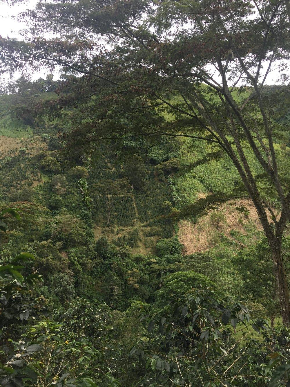 steep.jpeg