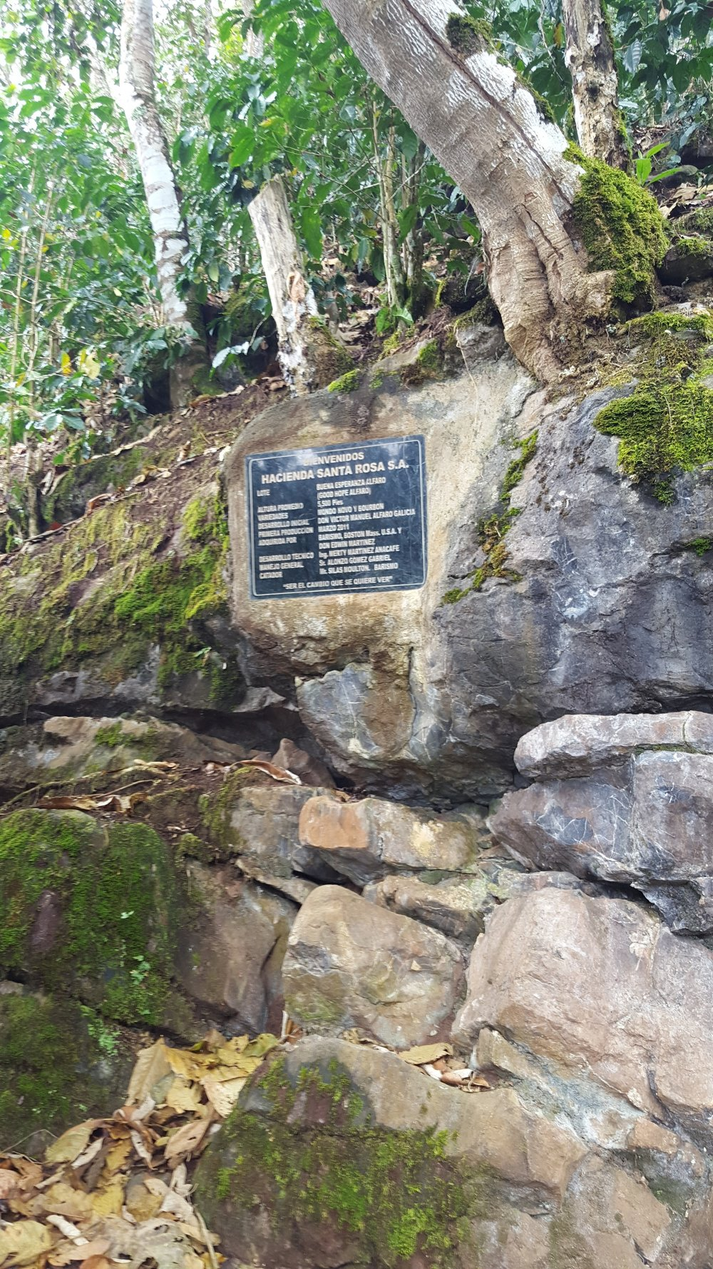 Plaque on the trail leading up to Buena Esperanza, commemorating the inaugural harvest.