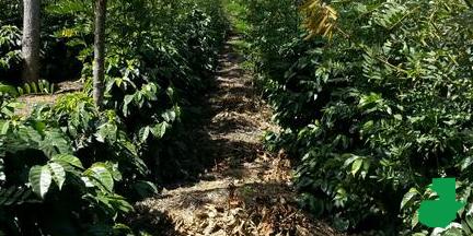 Bosque (Guatemala)