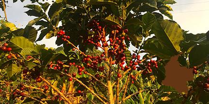 Los Naranjos (Colombia)